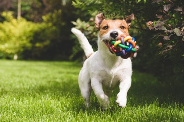 A playful dog fetching a ball.