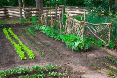 A garden on a plot of land.