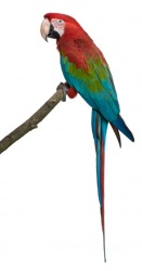 The vivid colors of a parrot's plumage actually acts as camouflage in it's natural habitat of the rainforest.