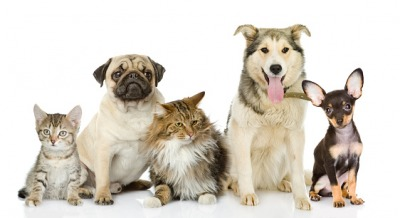 The plural of cat and dog is cats and dogs.