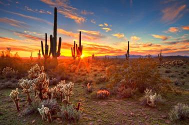 A poetic sunset in the desert.