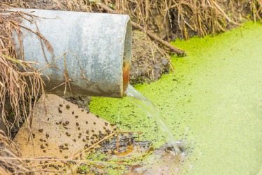 Polluted runoff draining into a waterway.