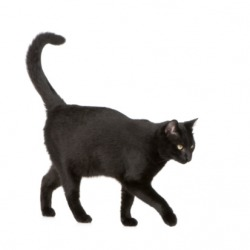If you are a superstitious person, then a black cat crossing your path is portent of bad luck in your future.