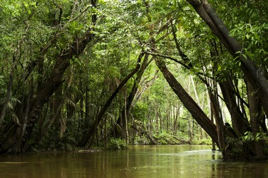 Igarapé in the Brazilian Amazon is a pristine rainforest.