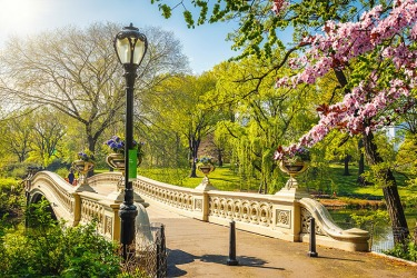 Bow bridge in New York City's Central park is a public park that everyone can visit.