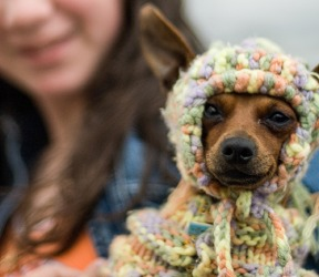 Nancy enjoys knitting quirky outfits for her dog Sassy to wear on their outings to the park.