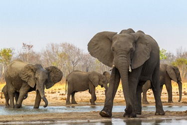The elephant family is protected from poachers in the refuge.