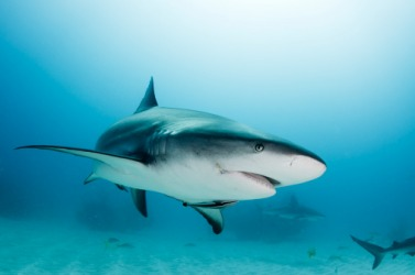 Sharks have the ability to continuously regenerate their teeth throughout their lifetime.