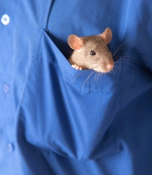 Smitty, a pocket size rat, enjoys trips to the pet store with his owner Larry.