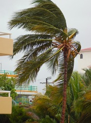 The wind blew relentlessly as the tropical storm moved through during our annual beach vacation.