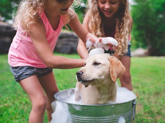 One of Madison and Zoey's responsibilities is to give their dog Tucker a bath.