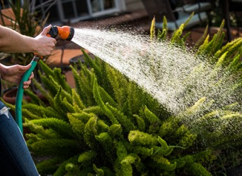 The water hose nozzle restricts the flow of water to a gentle spray so the plants won't get damaged.
