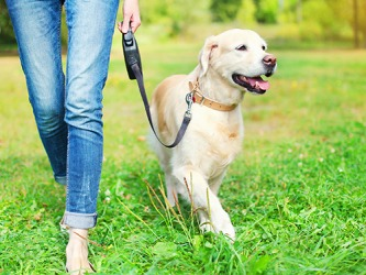 Regan uses a dog leash that retracts for her dog Annabelle when they walk in the park.