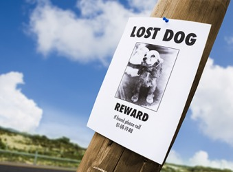 The distraught dog owner posted signs all over town offering a reward for her lost dog Lucille.