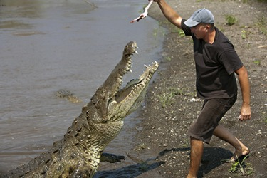 No right minded person would attempt to feed a crocodile by hand.