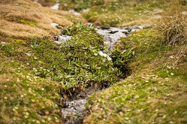 It is easy to jump over the rivulet to get to the other side of the field.