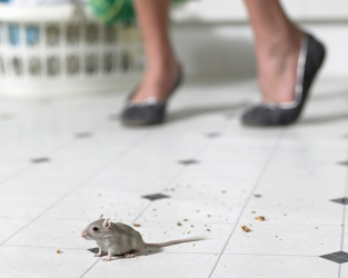 She was terrified when she saw the rodent on her kitchen floor.