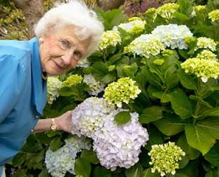 Jeanne has always loved the roundish blooms of hydrangea flowers.