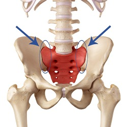 The sacroiliac joints are circled in blue.
