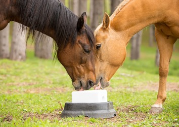 A saline is sometimes given to horses to replenish their sodium levels.