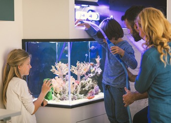 It is very important to monitor the salinity of a salt water fish tank in order to keep the fish and coral healthy.