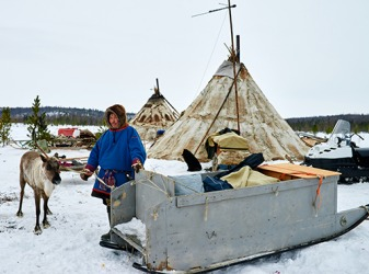 Nenets speak the Samoyed language and are the nomadic indigenous people of Siberia.