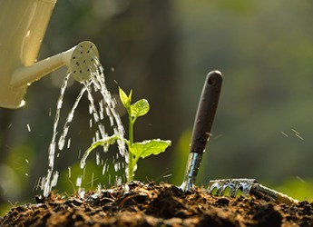 The saturated garden soil will help the seedling grow into a healthy plant.