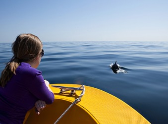 Laurie continued scanning the surface of the ocean in search of dolphins.