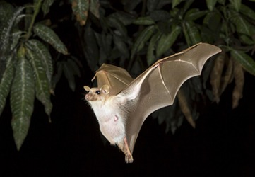 Bats have exceptional sensory capabilities that allow them to fly in complete darkness.