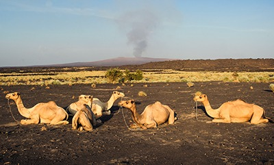 Erta Ale is an active shield volcano in Ethiopia.