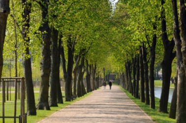 A tree lined boulevard in Germany.