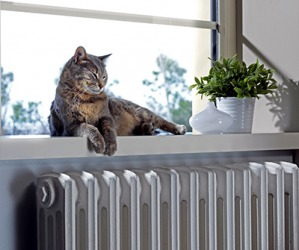Iggy likes to nap on the sill above the radiator in the winter.