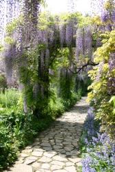 A wisteria bower.