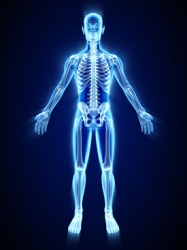The human skeletal system contains 206 bones.