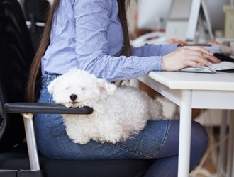Sheri's dog Snowball likes to sleep on her lap while she works.