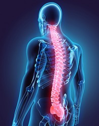 Smoris nodes are found in the mid to lower part of the spine, are fairly common, and usually do not cause any symptoms.