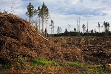The degradation of the once pristine forest has had a negative impact o the wildlife in that area.