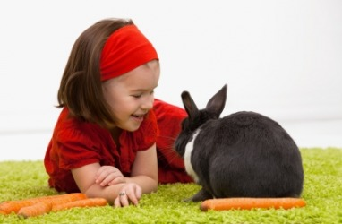 A little girl with her pet bunny.