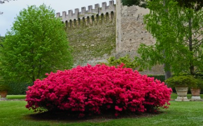 A bush with bright red flowers.