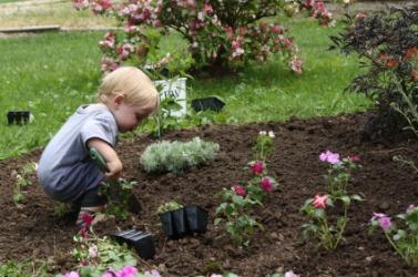 A toddler busy in the garden.