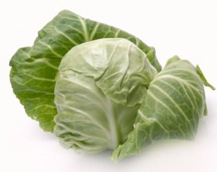 A head of green cabbage.