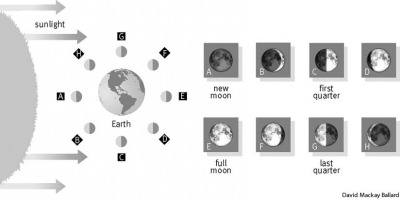moon Half of the Moon is always in sunlight, as shown on the left. The relative positions of the Earth, Moon, and Sun determine the Moon's phase as seen from the Earth, as shown on the right.