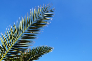 Palm leaves against a cerulean sky.