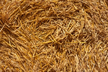 Fine cut straw or chaff.