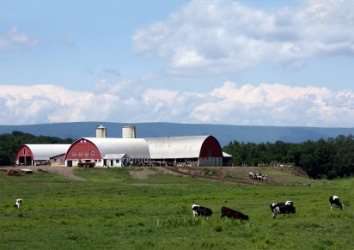 A dairy farm in Pennsylvania.