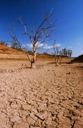 A dead tree in a barren landscape.