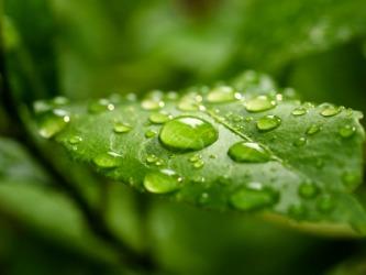 whut it dew meaning