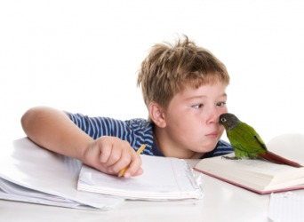 This boy's bird is a distraction from his homework.