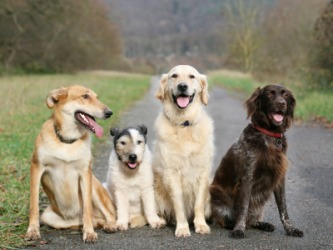 Four dogs of different breeds.