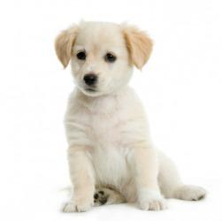 A cute little doggy.